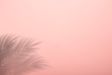 Shadow From Palm Leaves On A Pink Wall Background. Pink Background, Cardboard. Abstract Image