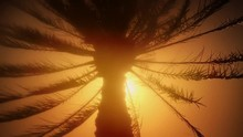 Sunshine Peering Through Silhouetted Palm Tree Foliage Golden Tone Light Late Afternoon Summertime Seaside Holiday Vacation Paradise Emotion Sensation Therapy Wellbeing Warmth