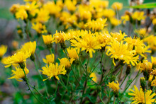 A Group Of Yellow Wildflowers....
