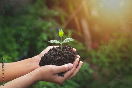 Tree planting on volunteer family's hands for eco friendly and corporate social Tablou Canvas