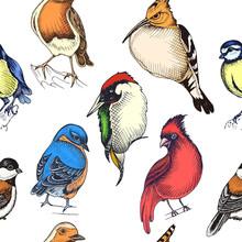 Sketch Hand Drawn Pattern With Green Woodpecker, Hoopoe, Cardinalis Cardinalis, Titmouse, Hoopoe. Animals Illustration Birds.