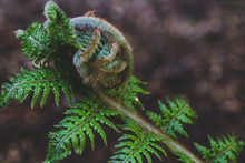 Close-up Shot Of Fern Branch W...