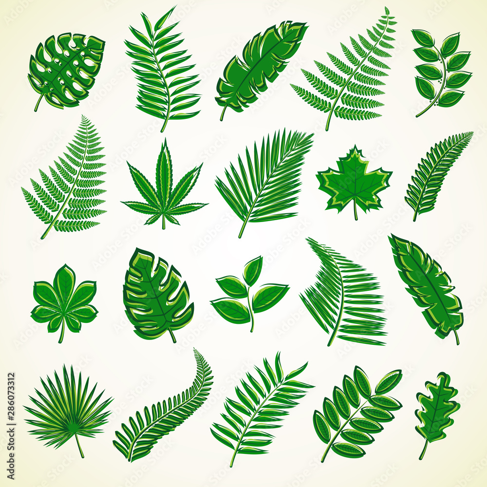 Fototapety, obrazy: Set of leaves. Collection icon tropical leaves. Vector