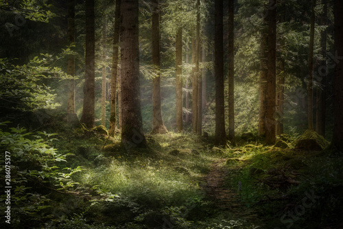 Fototapeta  Wald am Schlern