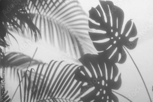 cienie-lisci-palmowych-i-lisc-monstera-na-betonowej-scianie-teksturowanej-tle-powierzchni-ton-bialy-i-czarny