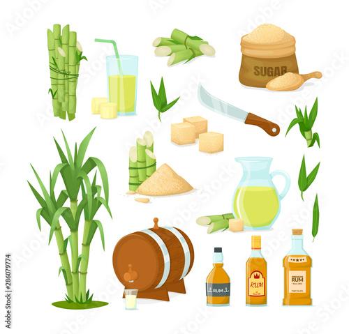 Slika na platnu Cane sugar with stem and leaf plants vector cartoon illustration