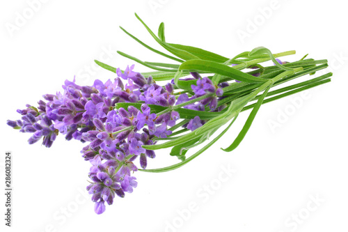 lavender flowers isolated on white background. bunch of lavender flowers. - 286082324