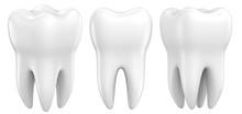 Set Of Dental Premolar Teeth 3...