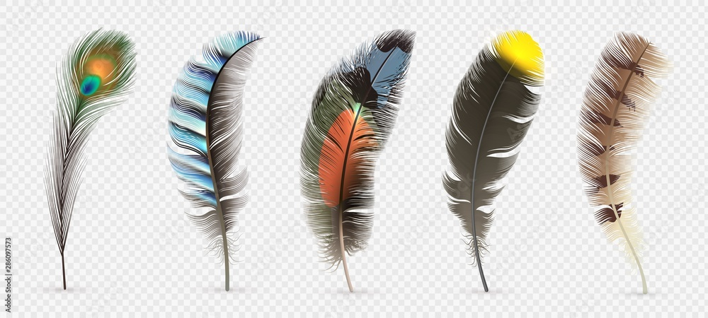 Fototapeta Realistic bird feathers. Detailed colorful feather of different birds. 3d vector collection isolated on transparent background. Illustration feather bird, peacock fluffy elegance plumage