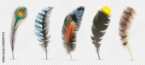 Realistic bird feathers Canvas Print