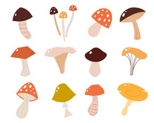 Set Of Mushrooms In A Flat Style. Vector Illustration Of Different Types Of Mushrooms.