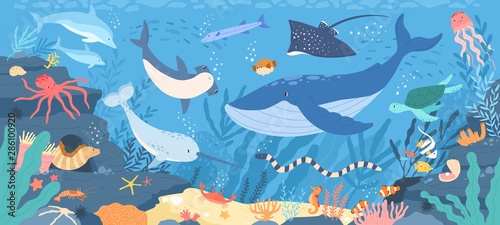 Fototapeta Fish and wild marine animals in ocean. Sea world dwellers, cute underwater creatures, coral reef inhabitants in their natural habitat, undersea fauna of tropics. Flat cartoon vector illustration. obraz