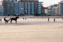 Training A Racehorse On The Beach At Autumn With Some Buildings In The Background