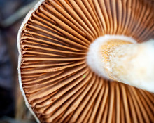 Under The Mushroom Cap. Bottom...