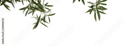 Olivenzweige mit Oliven, isoliert und freigestellt vor hellen Hintergrund Obraz na płótnie