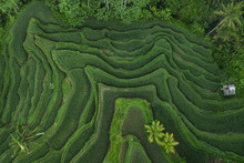 Aerial View Of Tegallalang Bal...