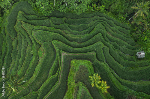 Door stickers Rice fields Aerial view of Tegallalang Bali rice terraces. Abstract geometric shapes of agricultural parcels in green color. Drone photo directly above field.