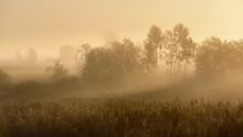 Rural Field Covered With Morni...