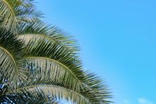 Palm Tree, Blue Sky Background, Nature Garden