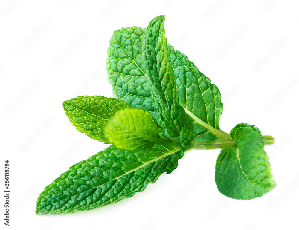 Fototapety, obrazy: Mint Isolated. Peppermint leaf on a white   background.  Macro