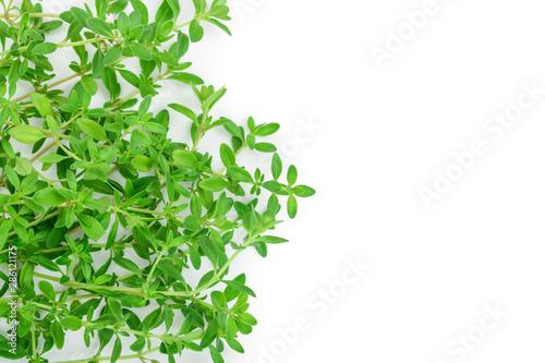 Fototapeta  Fresh thyme spice isolated on white background