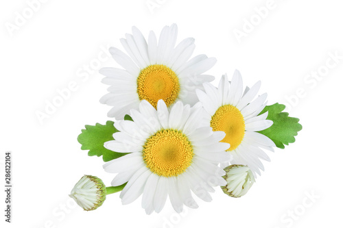 Photo sur Aluminium Marguerites one chamomile or daisies with leaves isolated on white background