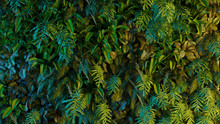 Tropical Bamboo Neon Forest Ba...
