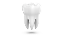 Dental 3d Model Of Premolar To...