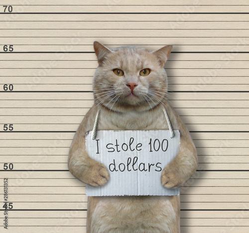 The cat criminal has the sign around his neck that says  I stole 100 dollars Fototapet