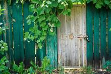 Old Wooden Door In Greenery Wi...