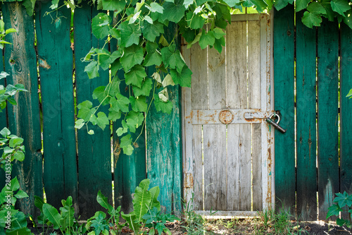 Old wooden door in greenery with sun beams, sun break and shadows. Green wooden fence