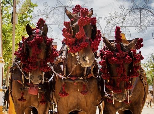 Three Andalusian horses in Feria del Caballo in Jerez de la Frontera (Cadiz, Spain)