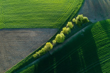 Aerial View Of Green Fields And Tree Lined Dirt Road