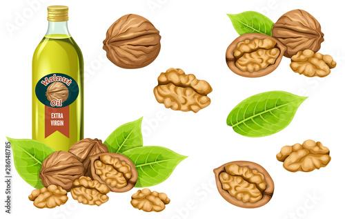 Cuadros en Lienzo Set walnut oil, seed and leaf