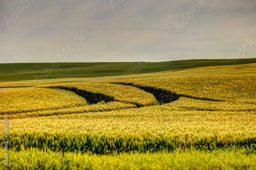 Deurstickers Honing Farmland landscapes in the Alberta countryside