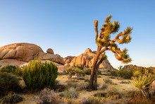 Joshua Tree National Park, Moj...