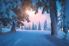 Fabulous Winter View Of Mountain Forest