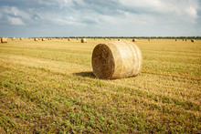 Rolls Of Hay Bales In A Field. One Large Roll In The Foreground.