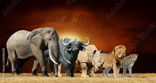 Big five on savanna landscape background and Mount Kilimanjaro at sunset