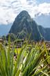 Machu Picchu, Peru - 05/21/2019: Huayna Picchu at the  Inca site of Machu Picchu in Peru.