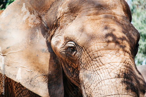 Photo African elephant in bioparc Valencia