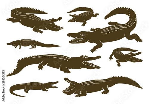 Set of Crocodile Logo Vector Wallpaper Mural