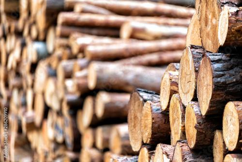 Recess Fitting Firewood texture Holzstämme im Wald nach dem Fällen
