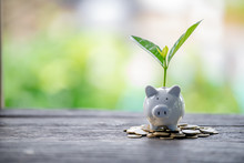 Pig Piggy Bank And Seedlings Grown On Bottles - Investment Ideas For Growth