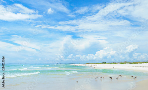 Panorama of the Beautiful White Sand Beach of the Florida Gulf Coast Wallpaper Mural