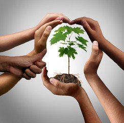 Multicultural Hands Holding A Plant