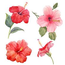 Watercolor Hibiscus Illustrations Set