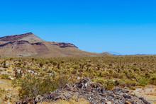 Summer In Mojave Desert National Preserve