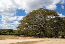 Plantation Millot