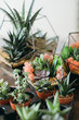 canvas print picture DIY florarium. Collection of green succulents growing in glass geometric vases and pots.